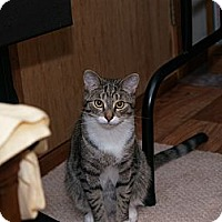 Adopt A Pet :: Timothy - Middletown, CT