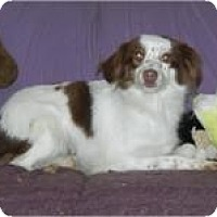 Adopt A Pet :: Tess ADOPTED!! - Antioch, IL