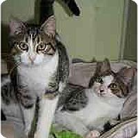 Adopt A Pet :: Grayson - Marietta, GA