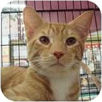 Adopt A Pet :: Mario Speed Wagon - Sacramento, CA