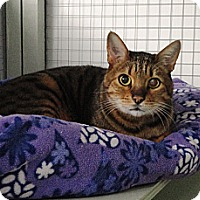 Adopt A Pet :: Sydney - Mission, BC