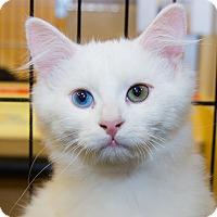 Adopt A Pet :: Inkwell - Irvine, CA