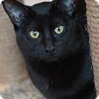 Adopt A Pet :: Matilda - St. Louis, MO