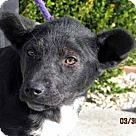 Adopt A Pet :: Lilly