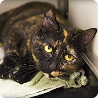 Adopt A Pet :: Flicka - Lincoln, NE
