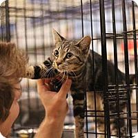 Adopt A Pet :: Fritzie - Sacramento, CA