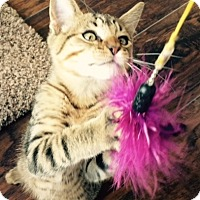 Adopt A Pet :: Scout - Trexlertown, PA
