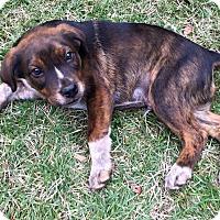 Adopt A Pet :: Kinder - West Hartford, CT
