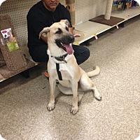 Adopt A Pet :: Milo - Delaware, OH