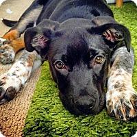 Adopt A Pet :: Rebel - Adopted! - San Diego, CA