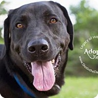 Adopt A Pet :: Wade - Broken Arrow, OK