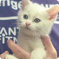 Adopt A Pet :: Berkeley - Reston, VA