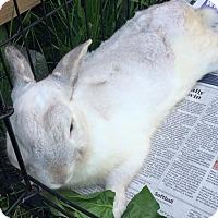 Adopt A Pet :: Ira - Middletown, OH