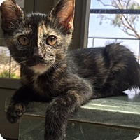 Adopt A Pet :: Lorelai - Los Angeles, CA