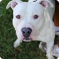 Adopt A Pet :: Marlon - San Diego, CA