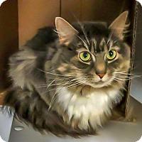 Adopt A Pet :: Foxy - Alexandria, VA