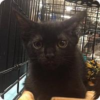 Adopt A Pet :: Binx - Gainesville, FL