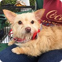 Adopt A Pet :: Cookie - Pompano Beach, FL