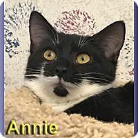 Adopt A Pet :: Annie - Aldie, VA