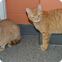 Adopt A Pet :: Jasmine & Opie - Michigan City, IN