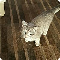 Adopt A Pet :: Toulouse - Princeton, MN