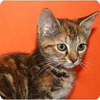 Adopt A Pet :: MARTHA - SILVER SPRING, MD