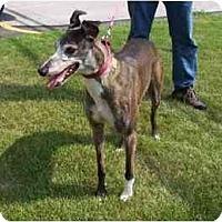 Adopt A Pet :: Dottie - Fremont, OH