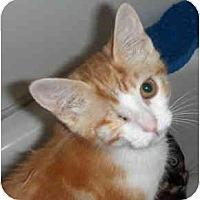 Adopt A Pet :: Malia - Davis, CA