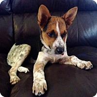 Adopt A Pet :: Charlie - Scottsdale, AZ