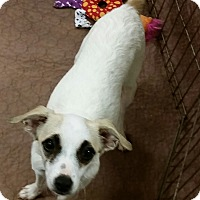 Adopt A Pet :: Stacy - Phoenix, AZ