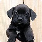 Adopt A Pet :: Lacie