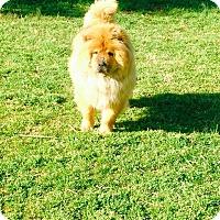 Adopt A Pet :: ASPEN - Dix Hills, NY