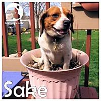 Adopt A Pet :: Sake - Pittsburgh, PA