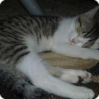 Adopt A Pet :: 1-ACE - Delmont, PA