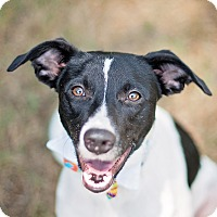 Adopt A Pet :: Jack - Kingwood, TX