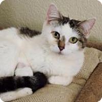 Adopt A Pet :: Bubbles - McKinney, TX