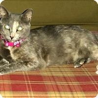 Adopt A Pet :: Dame Judy - Winterville, NC