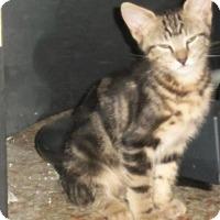 Adopt A Pet :: Davlin - Seminole, FL