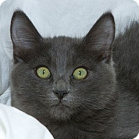 Adopt A Pet :: Zirya V - Sacramento, CA