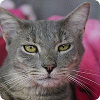 Adopt A Pet :: Captain Hook - Sarasota, FL