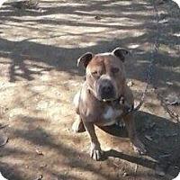 Adopt A Pet :: Rocco - Upper Sandusky, OH