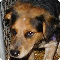 Adopt A Pet :: Sophia - MINNEAPOLIS, KS