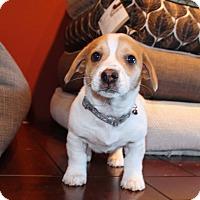 Adopt A Pet :: Hopscotch - Los Angeles, CA