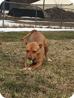 American Pit Bull Terrier Mix Dog for adoption in Pennsville, New Jersey - Pebbles