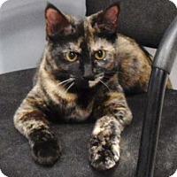 Adopt A Pet :: Pita - Merrifield, VA