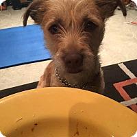 Adopt A Pet :: Pickles - Pitt Meadows, BC