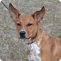 Adopt A Pet :: Cletus - Larned, KS