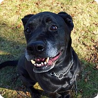 Adopt A Pet :: Max - Peace Dale, RI