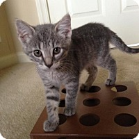 Adopt A Pet :: Luna - Whitehall, PA