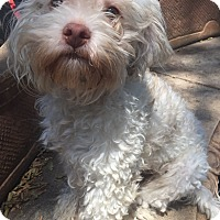 Adopt A Pet :: Humphrey - Santa Ana, CA